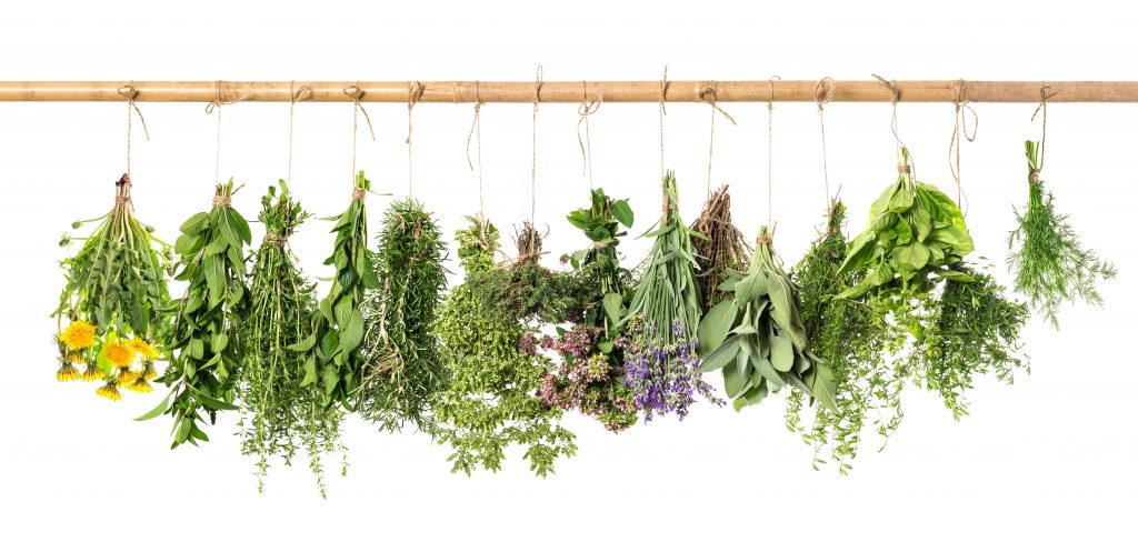 Fresh herbs hanging isolated on white background. Basil, rosemary, sage, thyme, mint, oregano, dill, marjoram, savory, lavender, dandelion